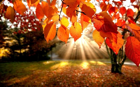 autumn-leaves-wallpapers-photos